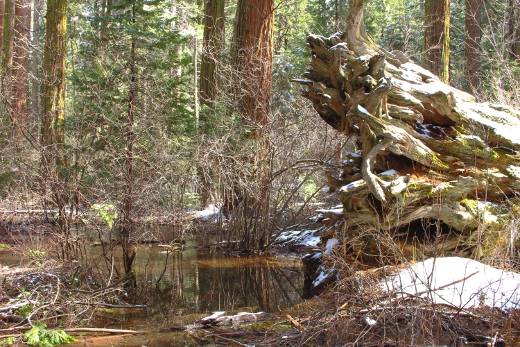 downed-log-and-pond